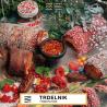 table_a5_trdelnik