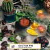 vozduh_kaktusovyj_finik1
